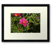 Pink and Bumble Bee Framed Print