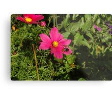 Pink and Bumble Bee Metal Print