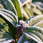 A touch of Frost by Deborah Clearwater