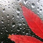 Autumn Rain by David Elliott