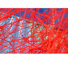 Red and Blue Web Photographic Print
