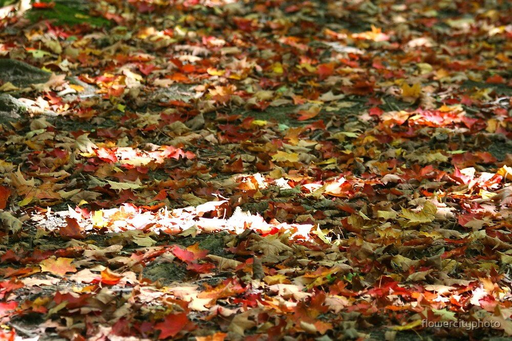 Leaves on the ground by flowercityphoto