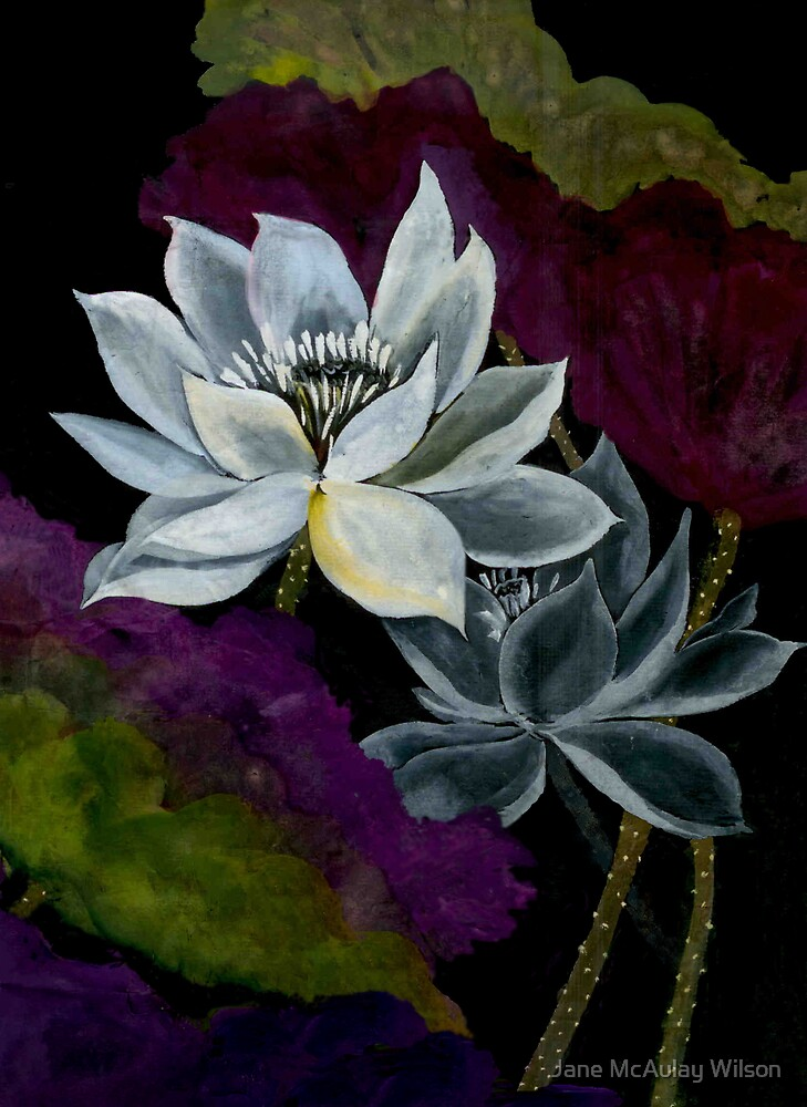 Midnight Lotus by Jane McAulay Wilson