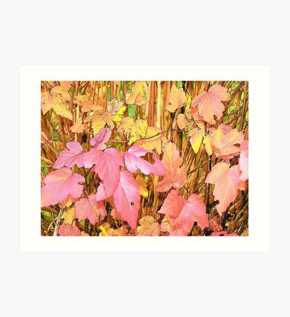 9 Bark Leaves Art Print