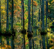 Colorful Cypress Swamp by photosan