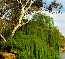 Murray River by Darren Stones