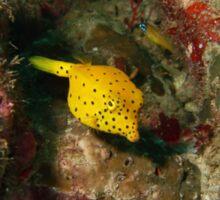 Yellow Boxfish Sticker