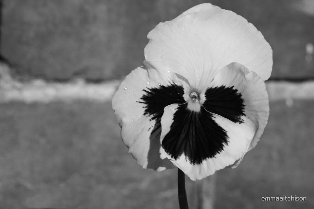 Bleeding Flower by emmaaitchison