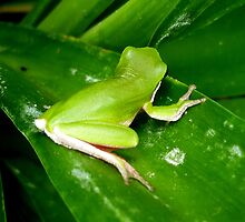 MINATURE TREE FROG by EricKyle