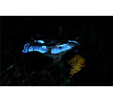 Beautiful Fungus.......found it in a very densley wooded Forest Photographic Print
