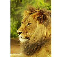 The King, 2 Photographic Print