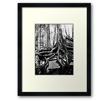Survival in Nature Framed Print