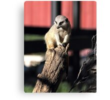 Im not just a meercat Canvas Print