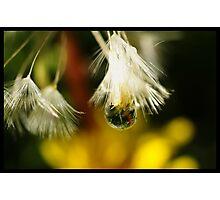 Microscopic World Photographic Print
