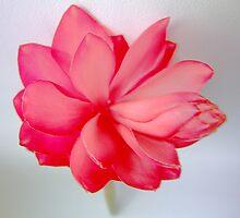 Popping Pinks by michelleduerden