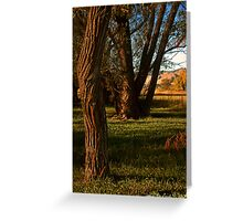 Natures Composition Greeting Card