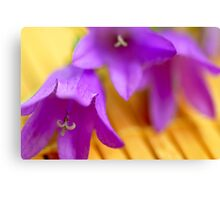 Bluebells macro Canvas Print