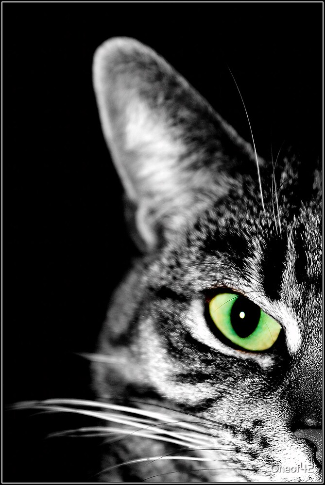 Cat's Eye by Oneof42