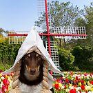 Dutch Dog by Louise Docker
