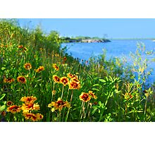 Wild flowers on seashore Photographic Print