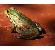 The Pet Frog  Photographic Print