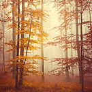 Lost in autumn by Philippe Sainte-Laudy