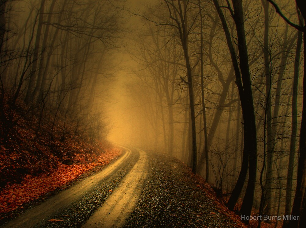 Foggy Wood by Robert Burns Miller