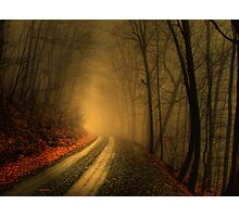 Foggy Wood Photographic Print