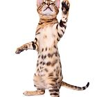Bengal Kitten Waving by idapix