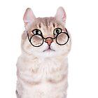 Cat In Glasses by idapix