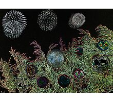 Merry Christmas with firework  Photographic Print