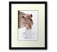 Cat Drinking From Cup Framed Print