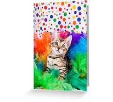 Party Bengal Kitten Greeting Card