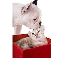 Puppy and Kitten Kisses Photographic Print