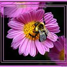 Lady Bee by Cheri Perry