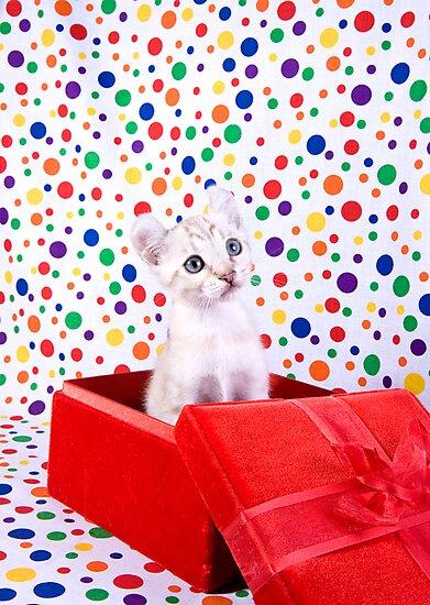 Birthday Party Kitten by idapix