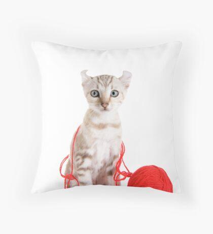 Kitten Caught in the Act Throw Pillow