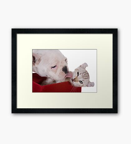 Puppy and Kitten Kisses Framed Print