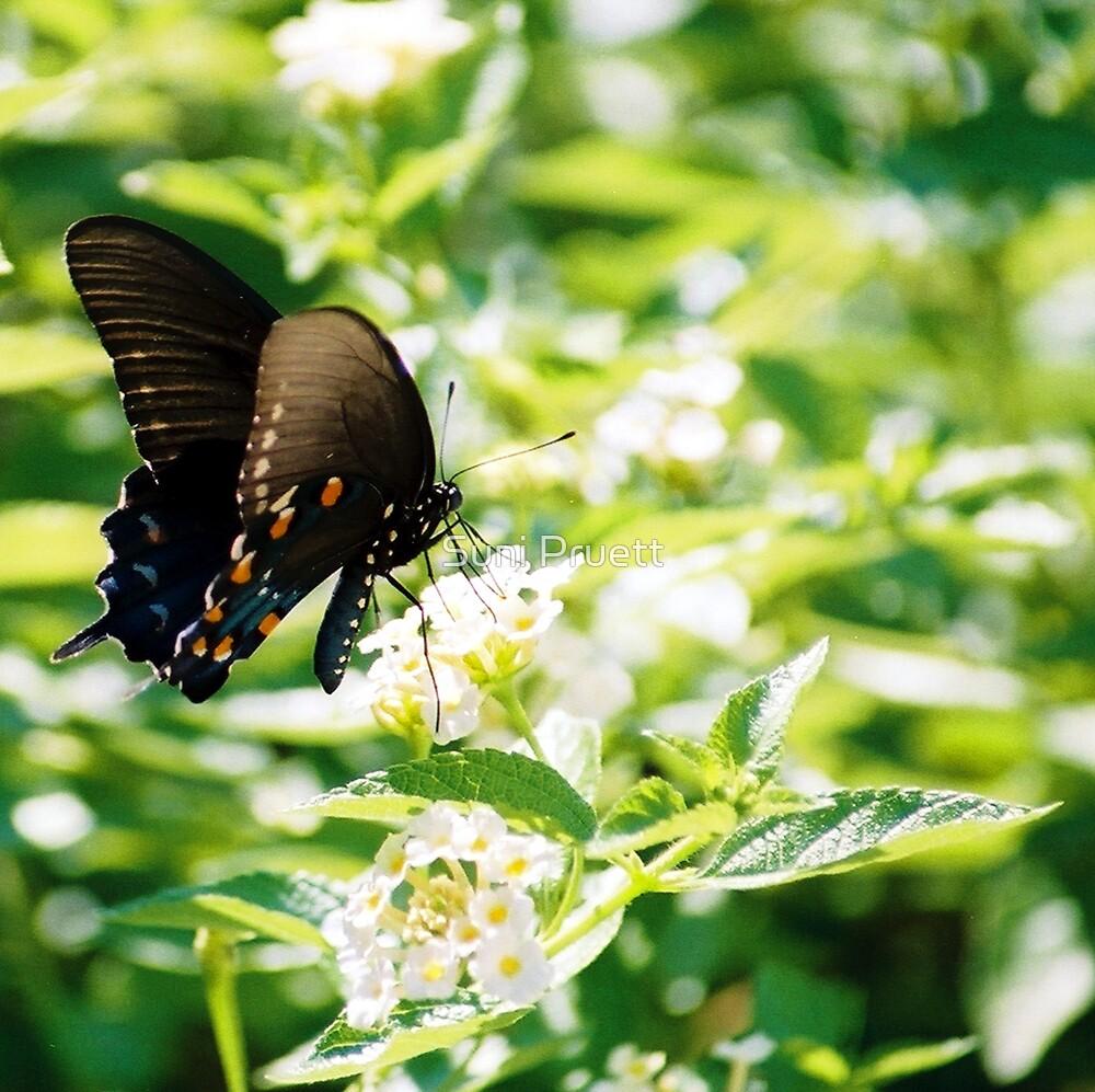 Swallowtail by Suni Pruett