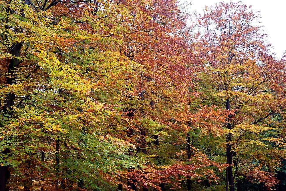 Autumn by Rudolf