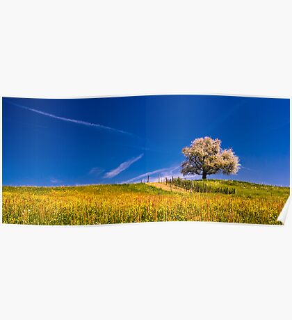 cherry tree in spring Poster