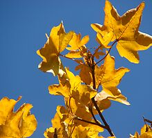 Autumn Gold Leaf by Andy Harris