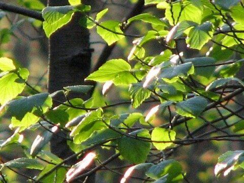 Leaves at Deckers Creek, West Virginia by thorn