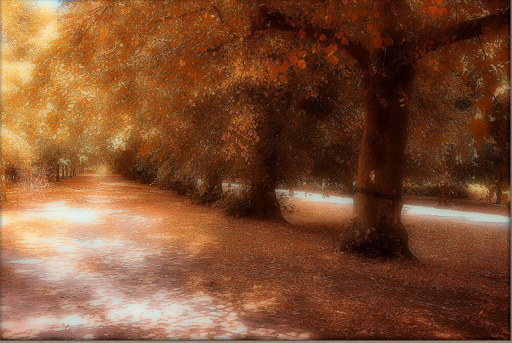 Walk in the park by Martyn Starkey