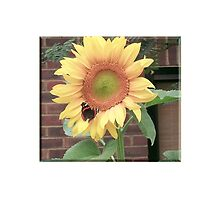 Sunflower on Butterfly by TOM HILL - Designer