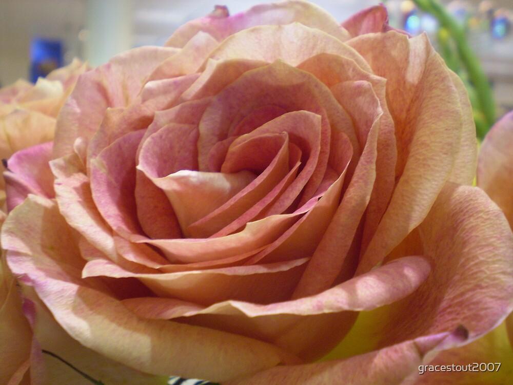 PETALS OF A ROSE by gracestout2007