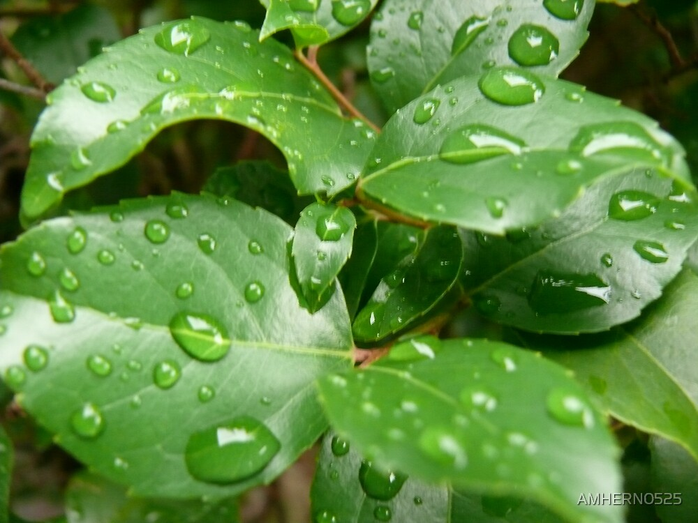 RAIN DROPS by AMHERN0525