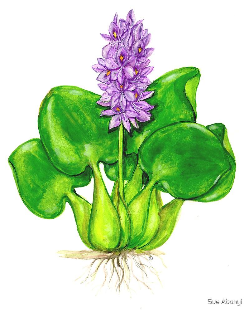 Water Hyacinth - Eichhornia crassipes by Sue Abonyi