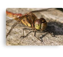 Common Darter Dragonfly Canvas Print