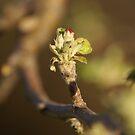 Spring by Brad